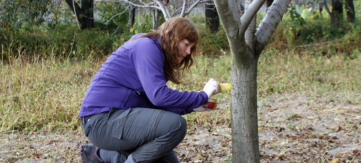 A volunteer marks an apple tree for continued monitoring.